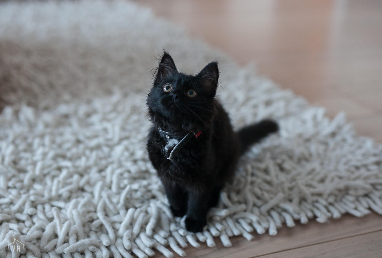Kissanpentu tulee taloon – mitä huomioida sisustuksessa?