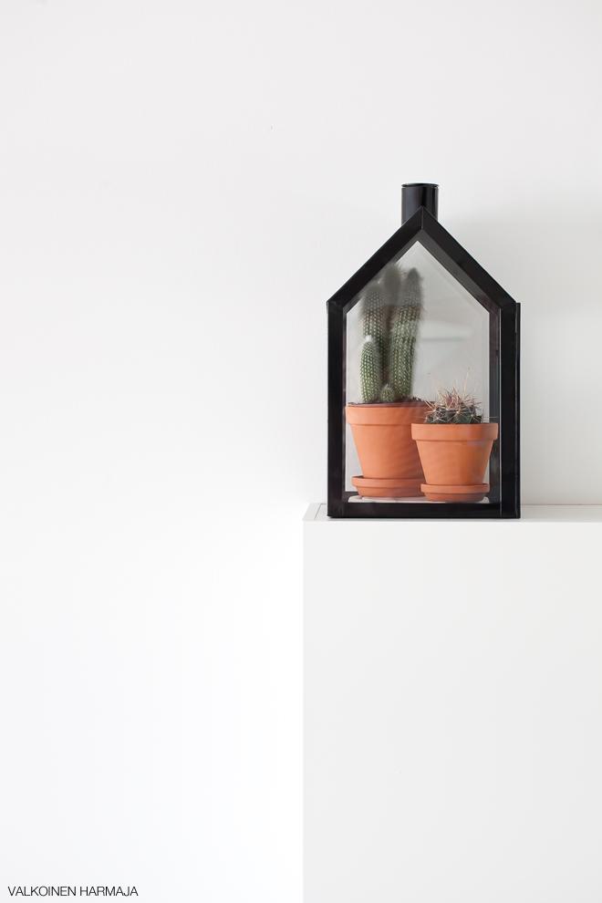 kaktukset1
