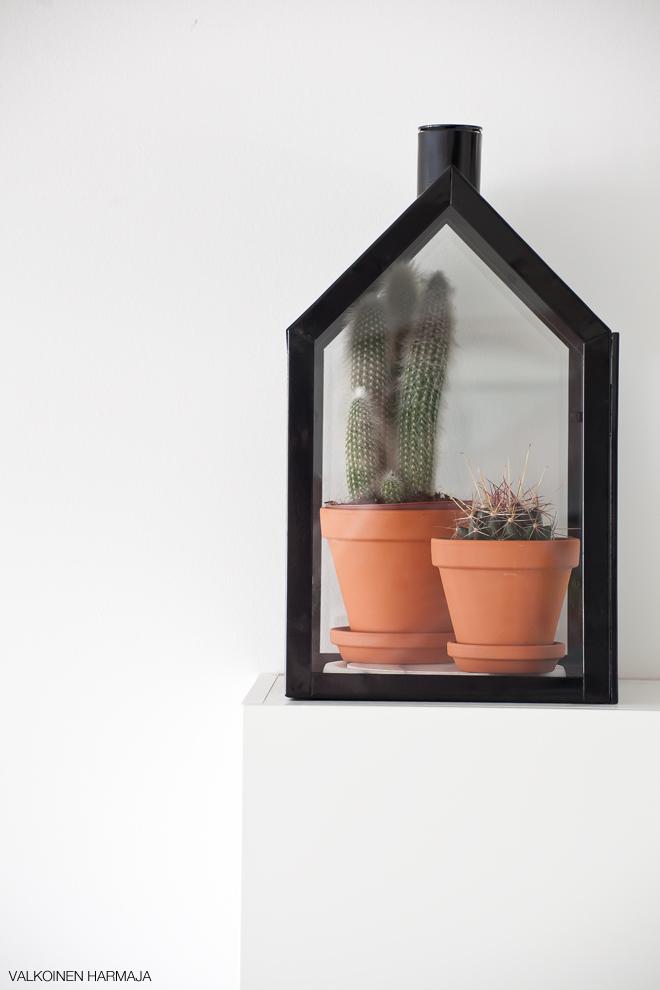 kaktukset2