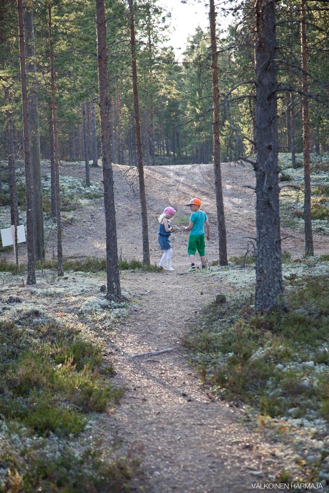 lapset_metsassa