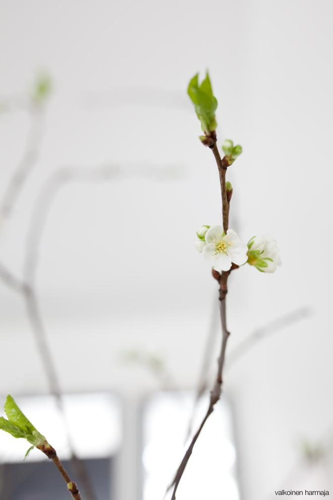 kukkii