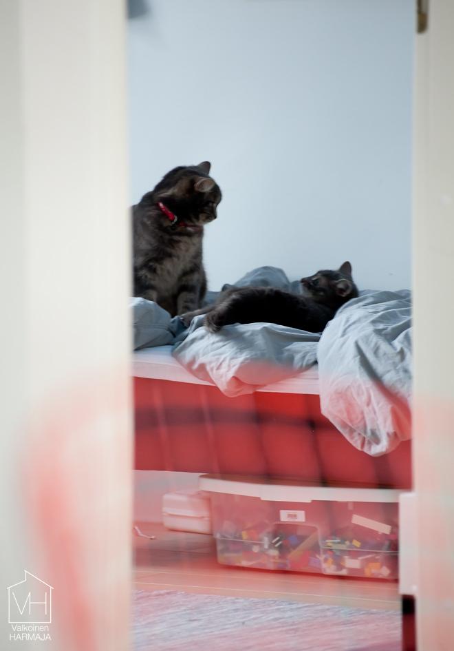 kissat_leikkii2