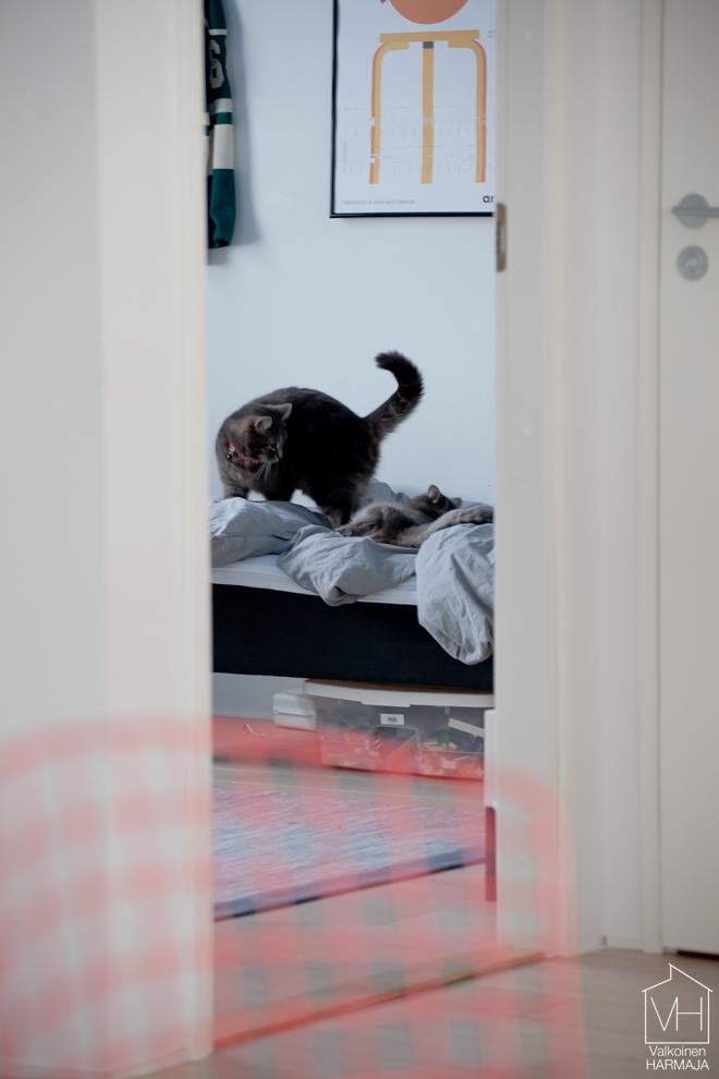 kissat_riehuu