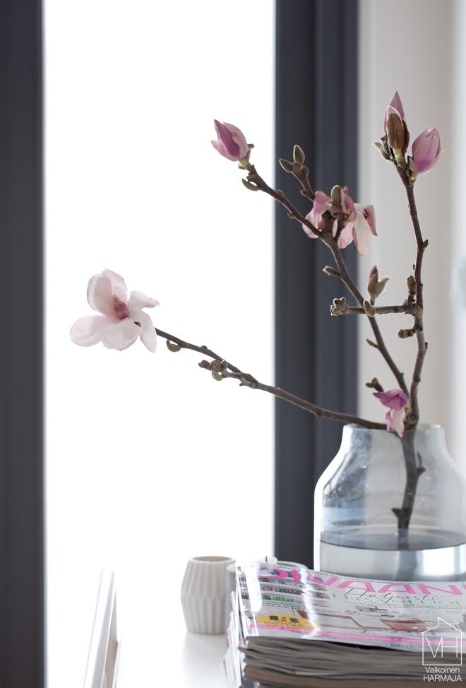 magnolian_kukka