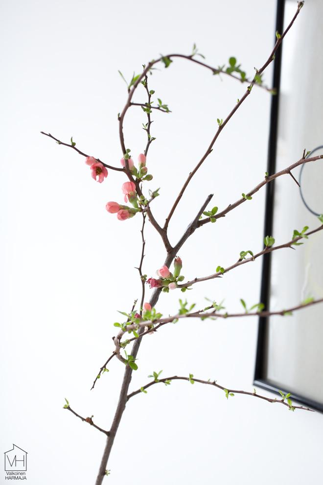 ruusukvitteni_lahi
