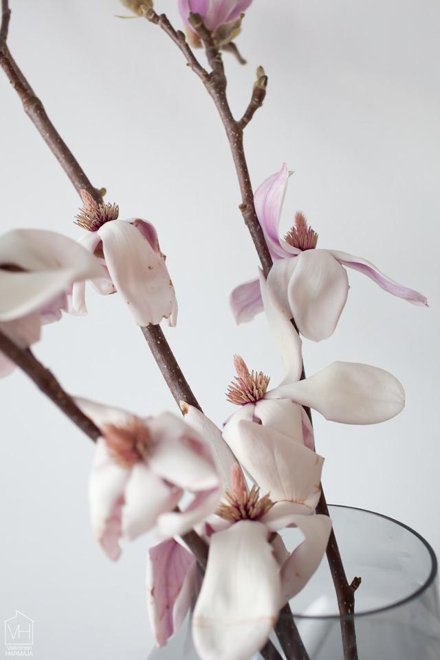 magnolia_lahi