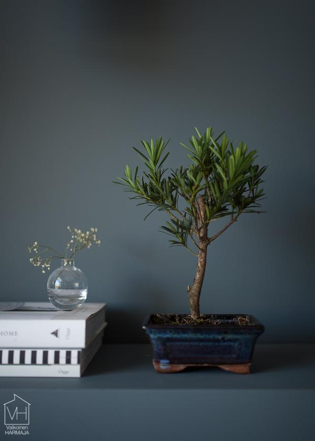 bonsaipuu-0430