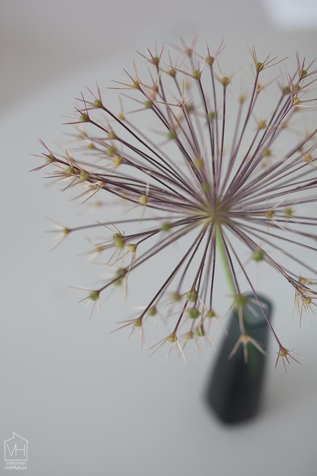 flower-5704