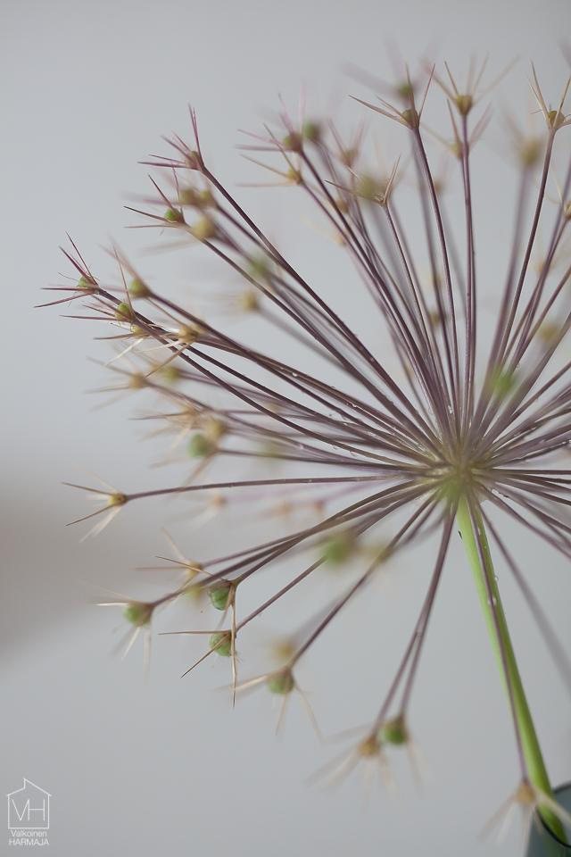 flower-5717