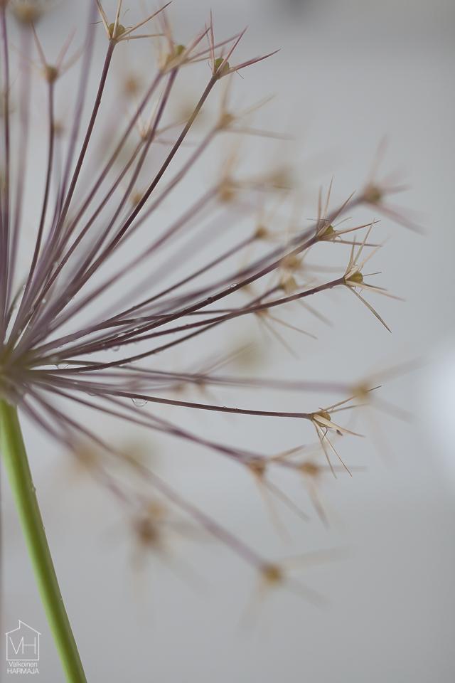 flower-5721